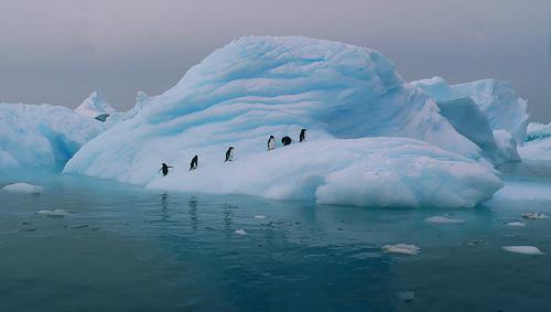 Hav, is og små pingviner.