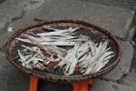 Bilde ev fisk i en kurv