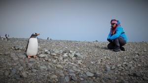 Jeg sitter på stranda og ser på pingviner som går opp og ned mellom sjøen og redet, uten å ense meg.