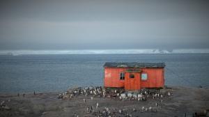 Rødt hus med pingviner rundt.