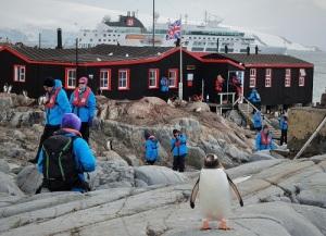 En pingvin står rett foran kamera. I bakgrunnen ser vi husene i Port Lockroy med hurtigruta i bakgrunnen.