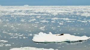 Blått hav og hvite isflak.