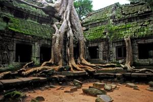 Tempelruiner der et stort tre har vokst sammen i ruinene.