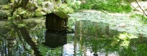 Grønne vekster, vann og en brun liten hytte ved vannet.