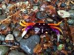 Krabbe i oransje og lilla.