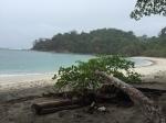 Strand med tre i forgrunnen, grønt hav og en øy i bakgrunnen.